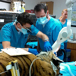 Dr Wade Gingerich of So FL Veterinary Dentistry and Dr Mike Peak The Pet Dentist of Tampa Bay